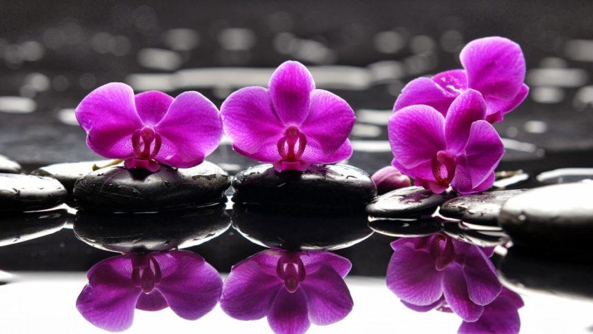 Come curare l'Orchidea Phalaenopsis